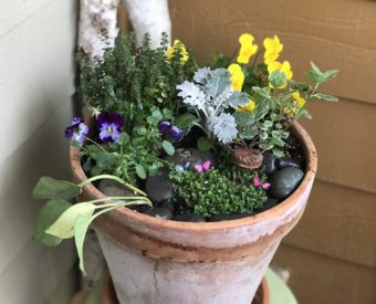 Miniature Gardens Indoors and Out